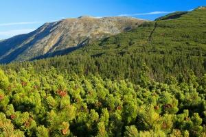Parki narodowe: 65 mln zł od Lasów Państwowych