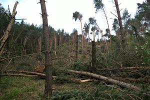 Nawałnice zniszczyły lasy w północno-wschodniej Polsce
