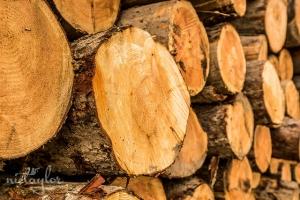 W Szczecinie zakończono submisję drewna cennego